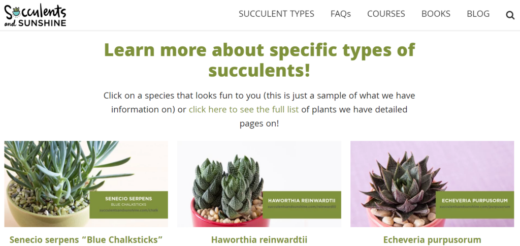 To showcase the homepage of www.succulentsandsunshine.com